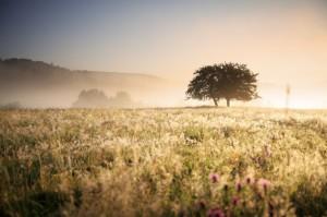 Tree in a Field - iStock
